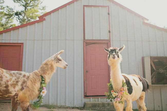 llamas with wreaths