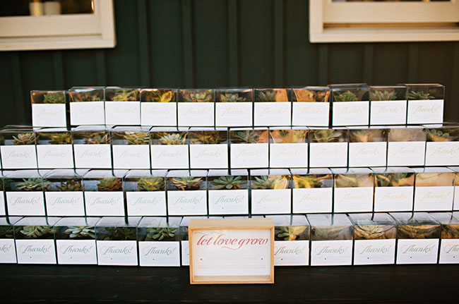 airplant favors