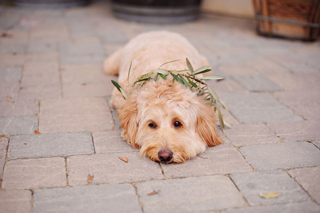 pup with wreath