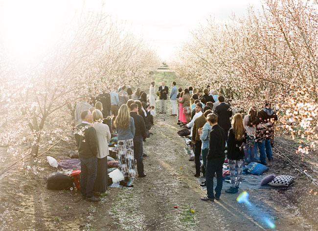 almond orchard wedding