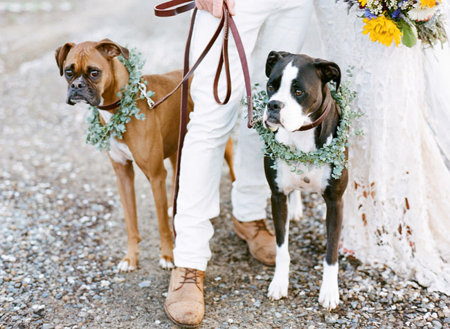 bride and groom with pups