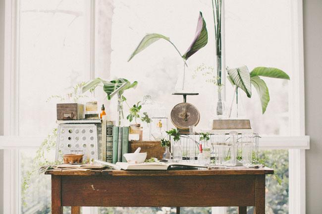 botanical science decor