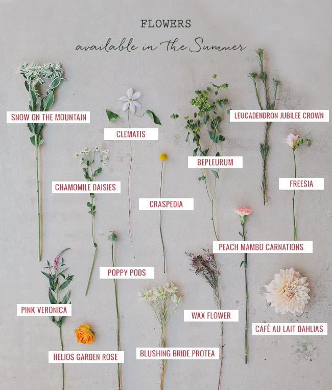 Seasonal Flower Guide: Summer