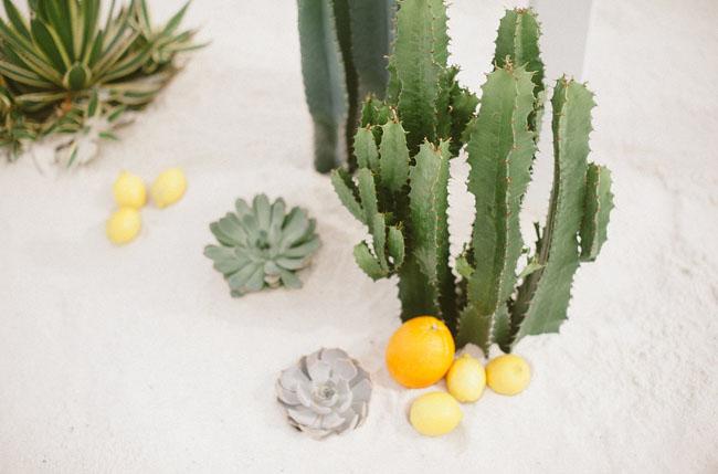 succulent and cactus arbor