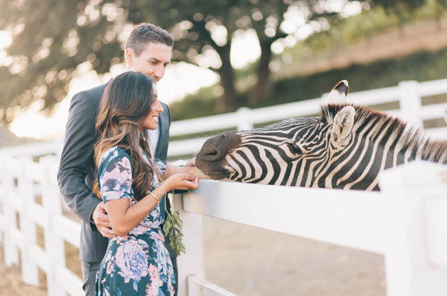zebra engagement