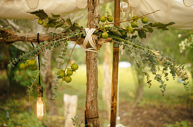organic foliage and bulbs