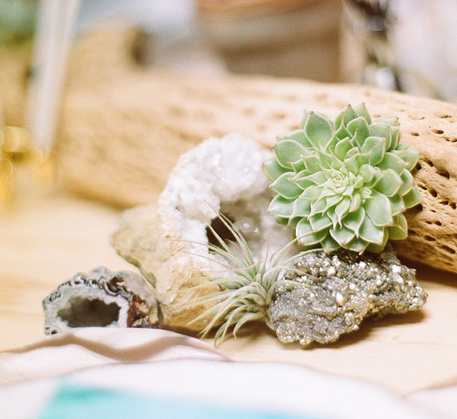succulents and geodes
