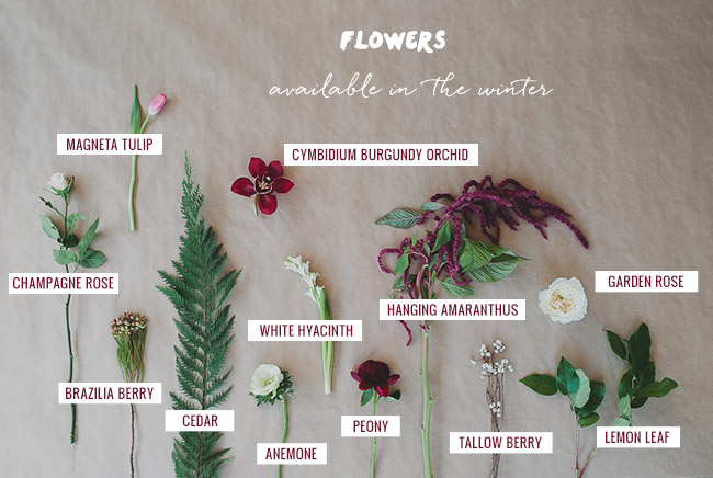 Seasonal Flower Guide: Winter, Flowers available in the Winter