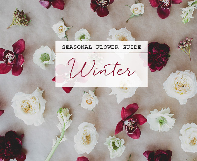 Seasonal Flower Guide: Winter, Winter Flower Guide
