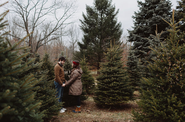 Christmas Tree farm proposal