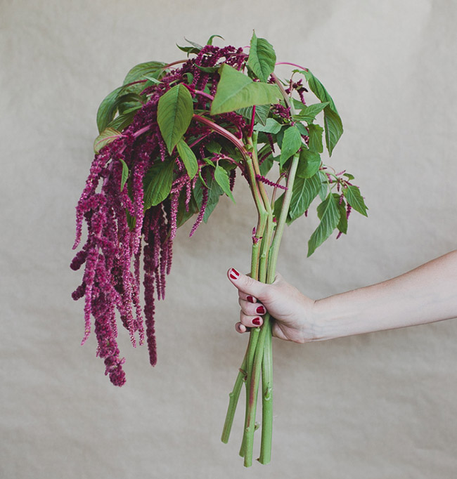 Seasonal Flower Guide: Winter, hanging amaranthus