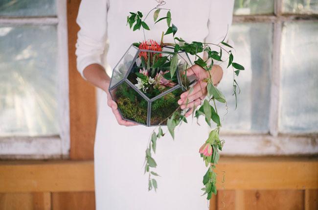 arrangement in terrarium