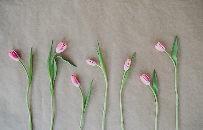 Seasonal Flower Guide: Winter, Winter Tulips
