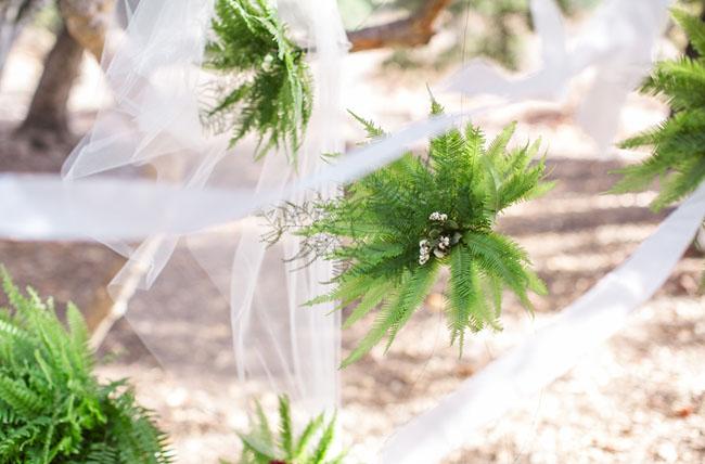 hanging fern backdrop