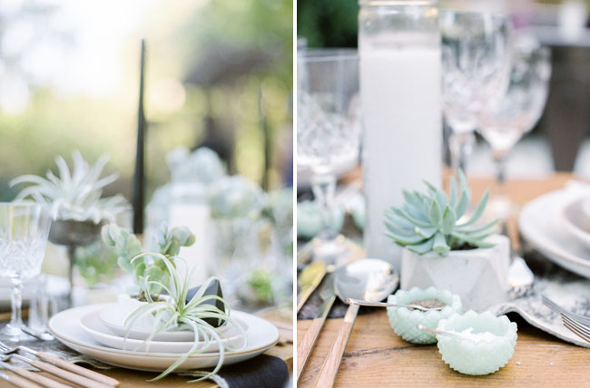succulent table dcor
