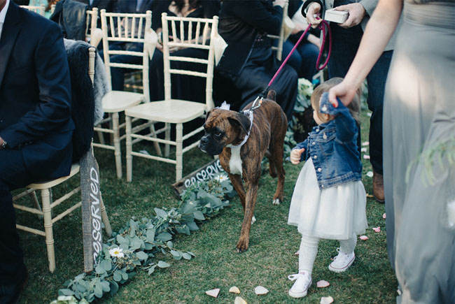boxer ring bearer