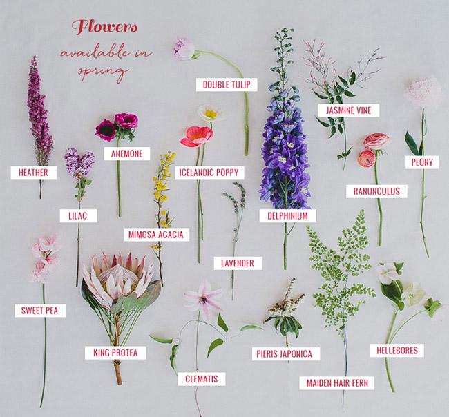 Spring Flower Guide Flowers
