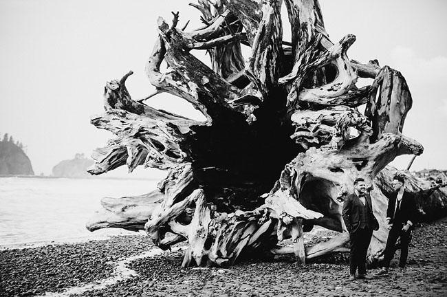 giant tree stump
