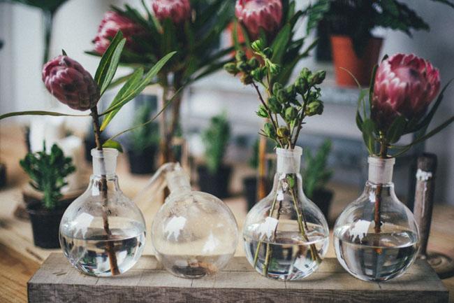 protea in bud vases