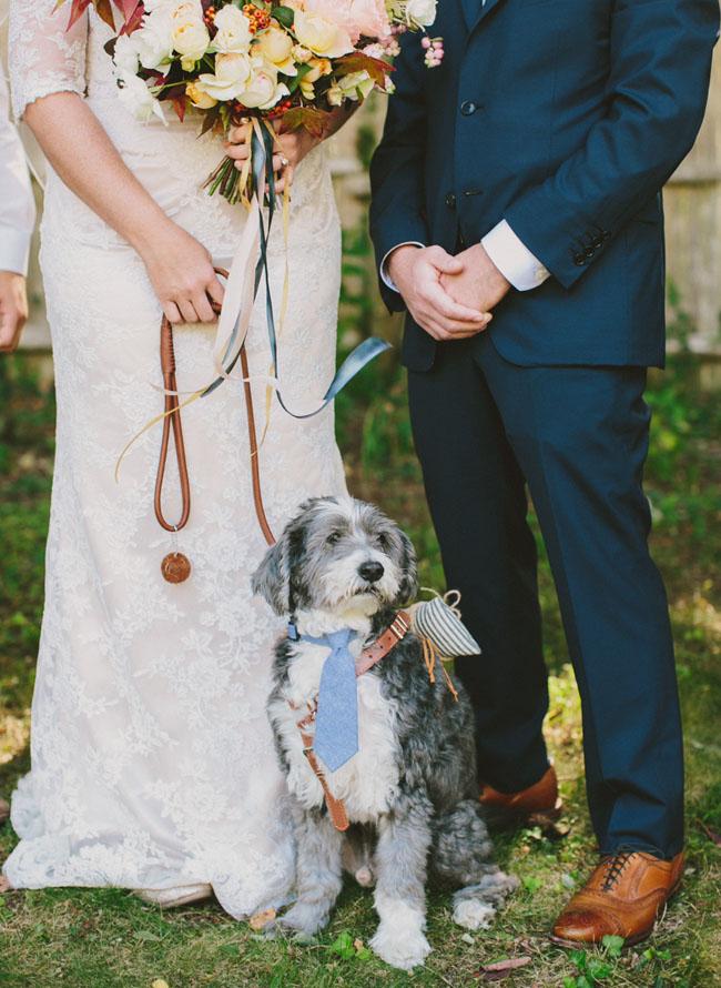 tie wearing ring bearer puppy