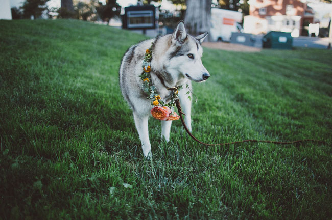 pup ring bearer