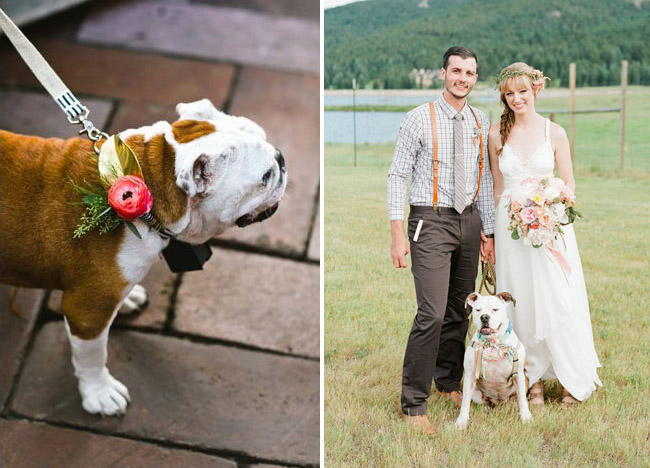 Dog with flowers on collar for Wedding