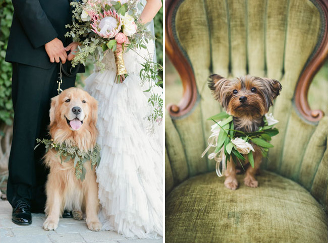 Dog In Leaf Wreath For Wedding