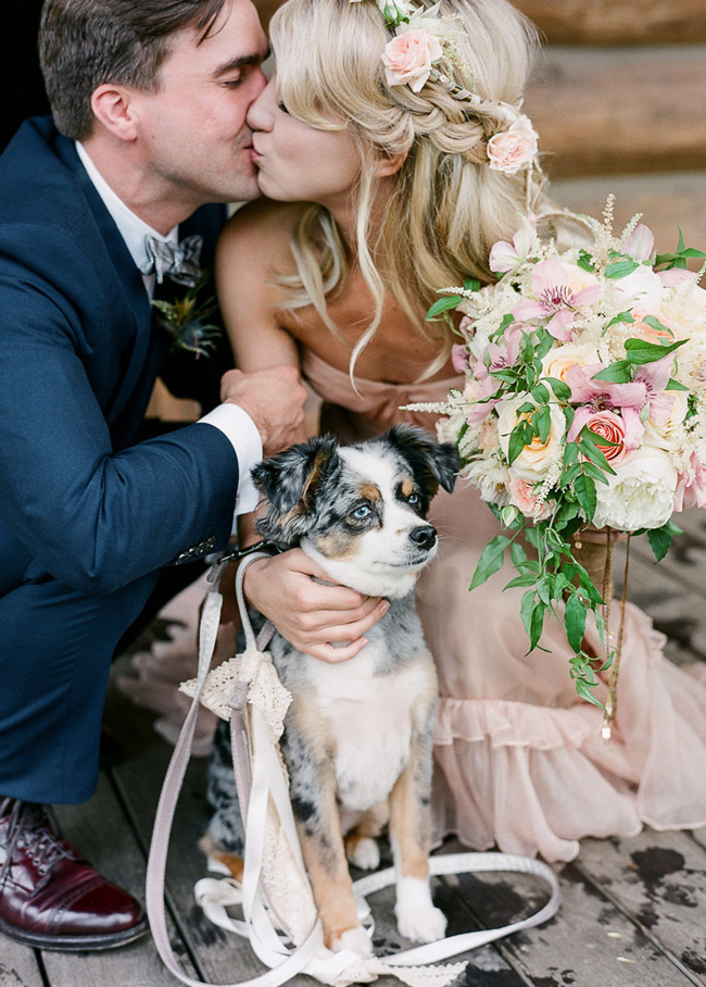 Wedding Dress Dog