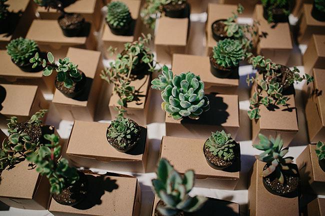 succulent favors