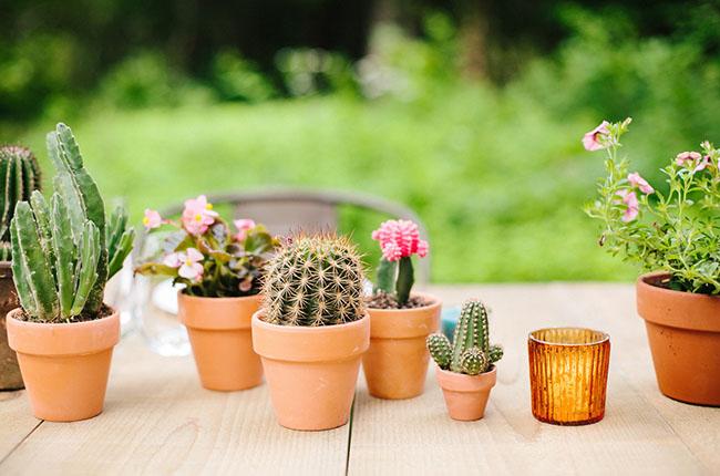 cactus centerpieces