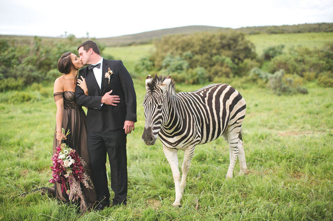 South African Anniversary Session with a Zebra: Heather + Cody ...