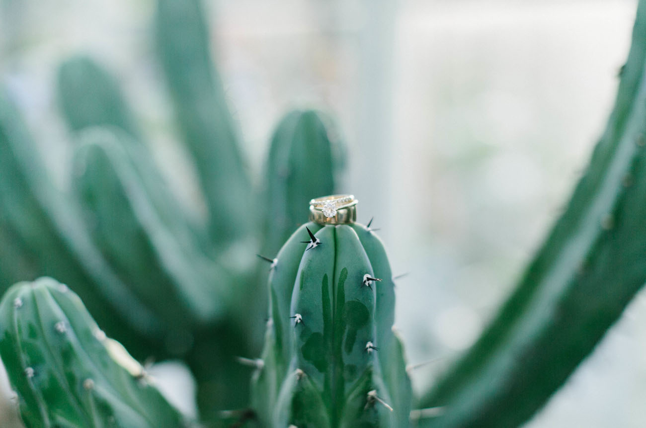 rings on cactus