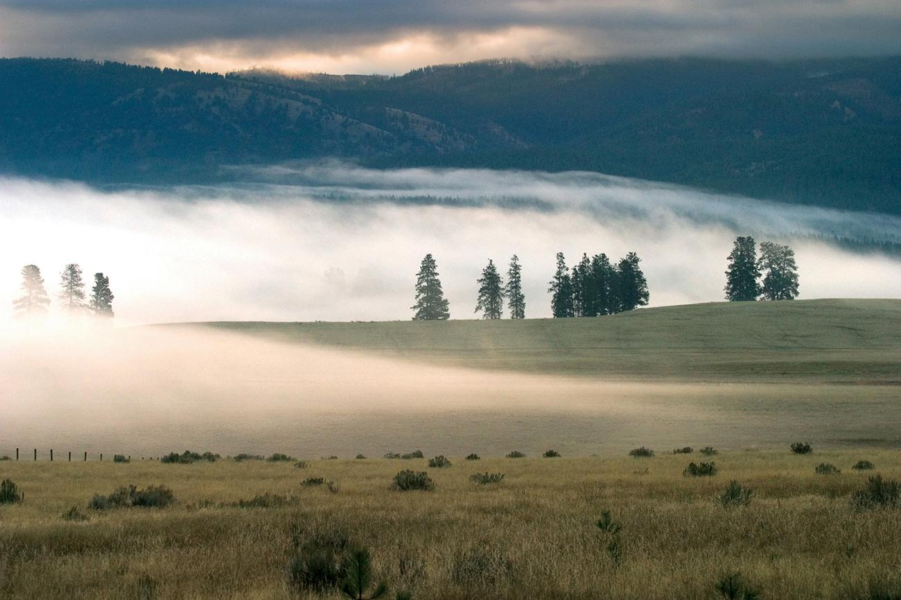 paws up foggy landscape