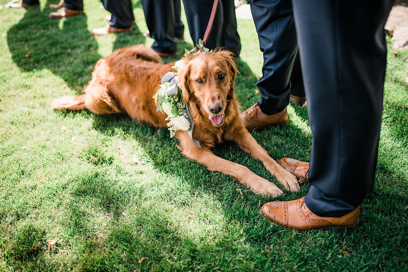 ring bearer pup