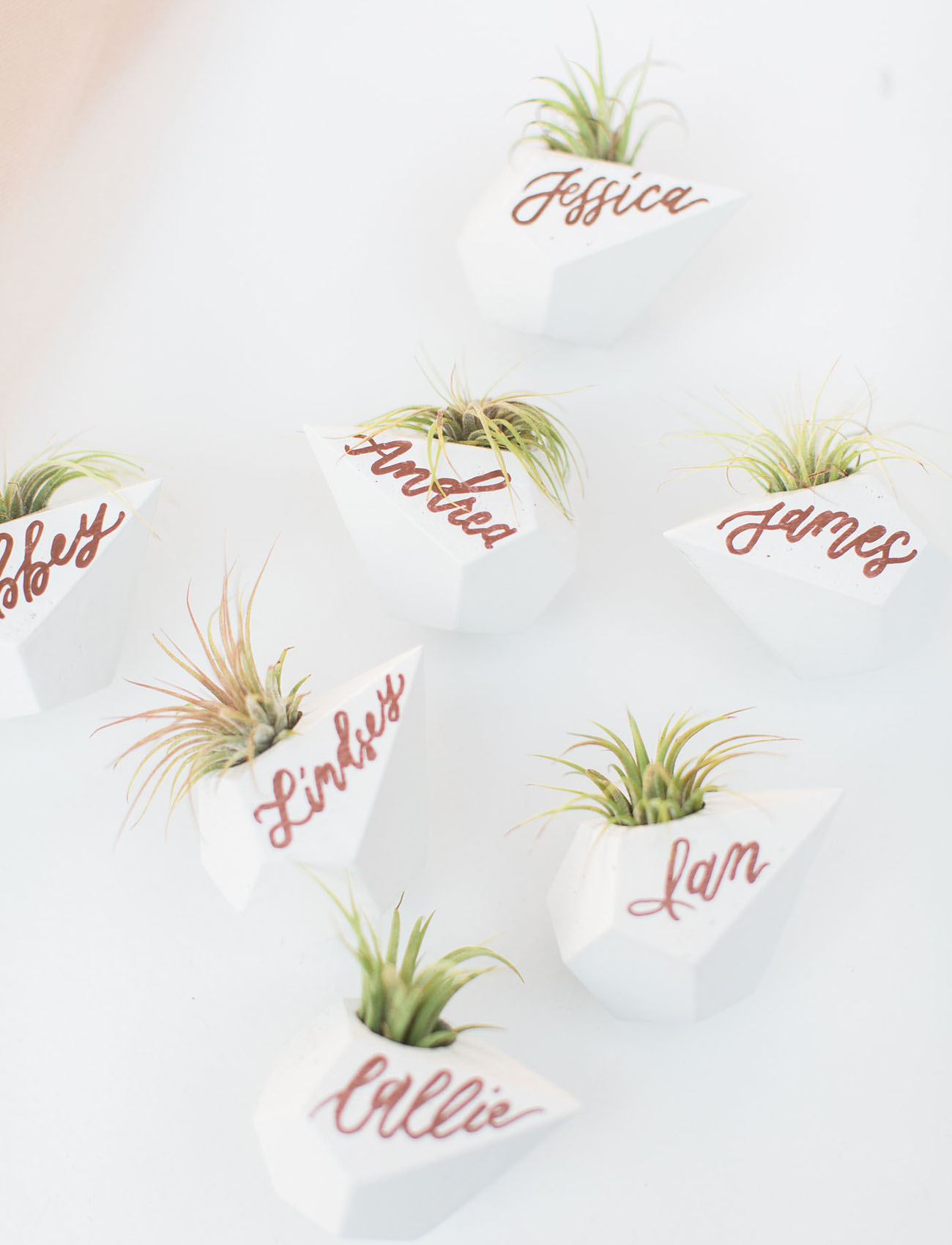 cactus name cards
