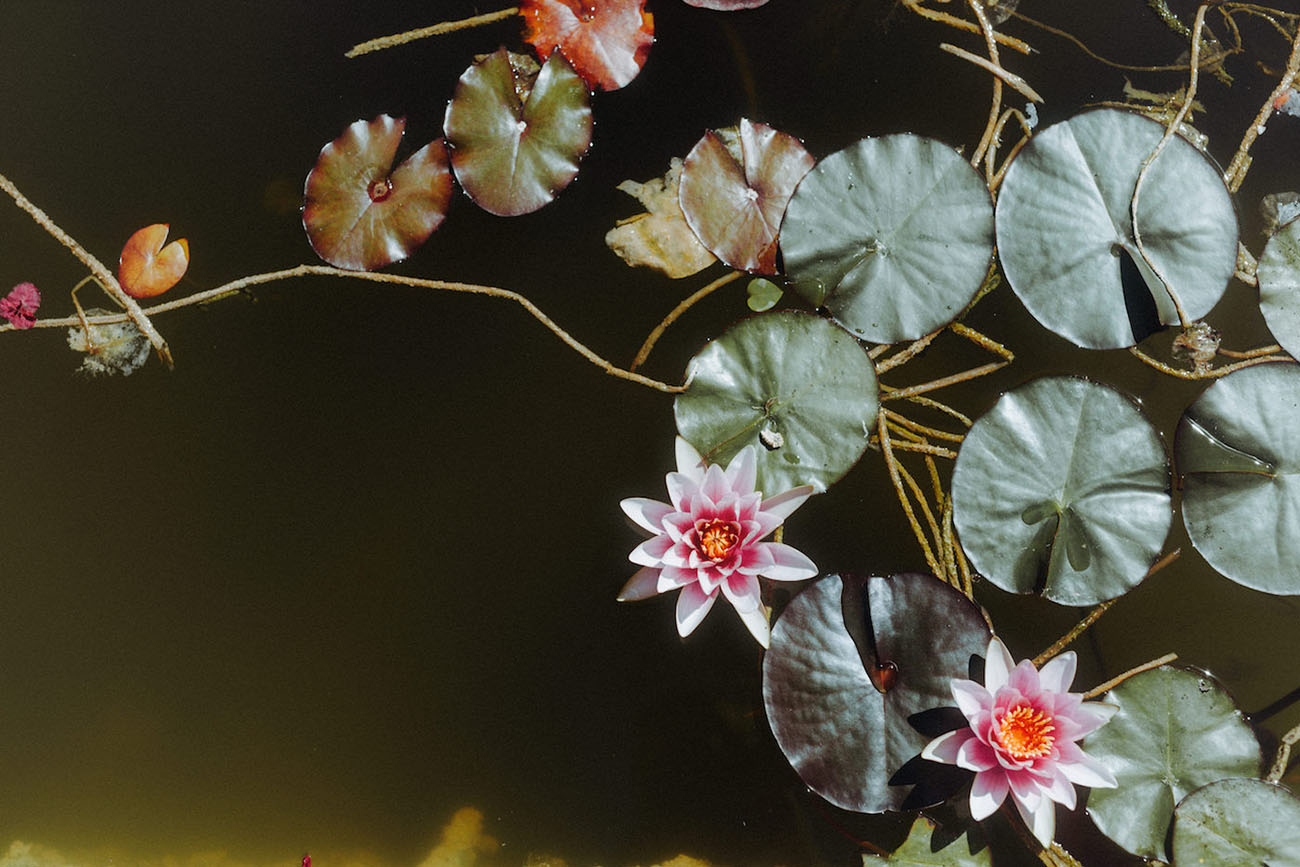 flowers in water