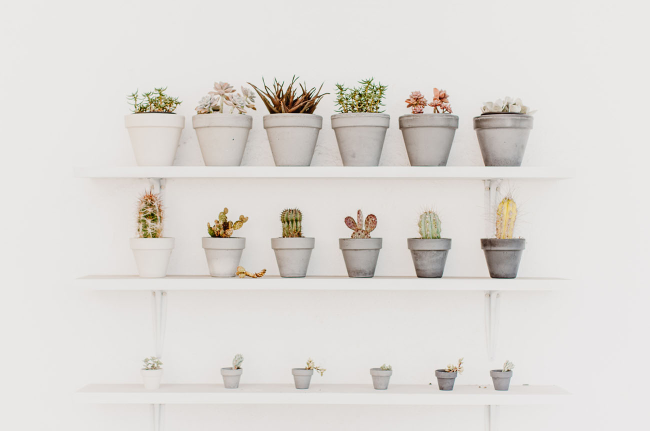 ombre potted plants