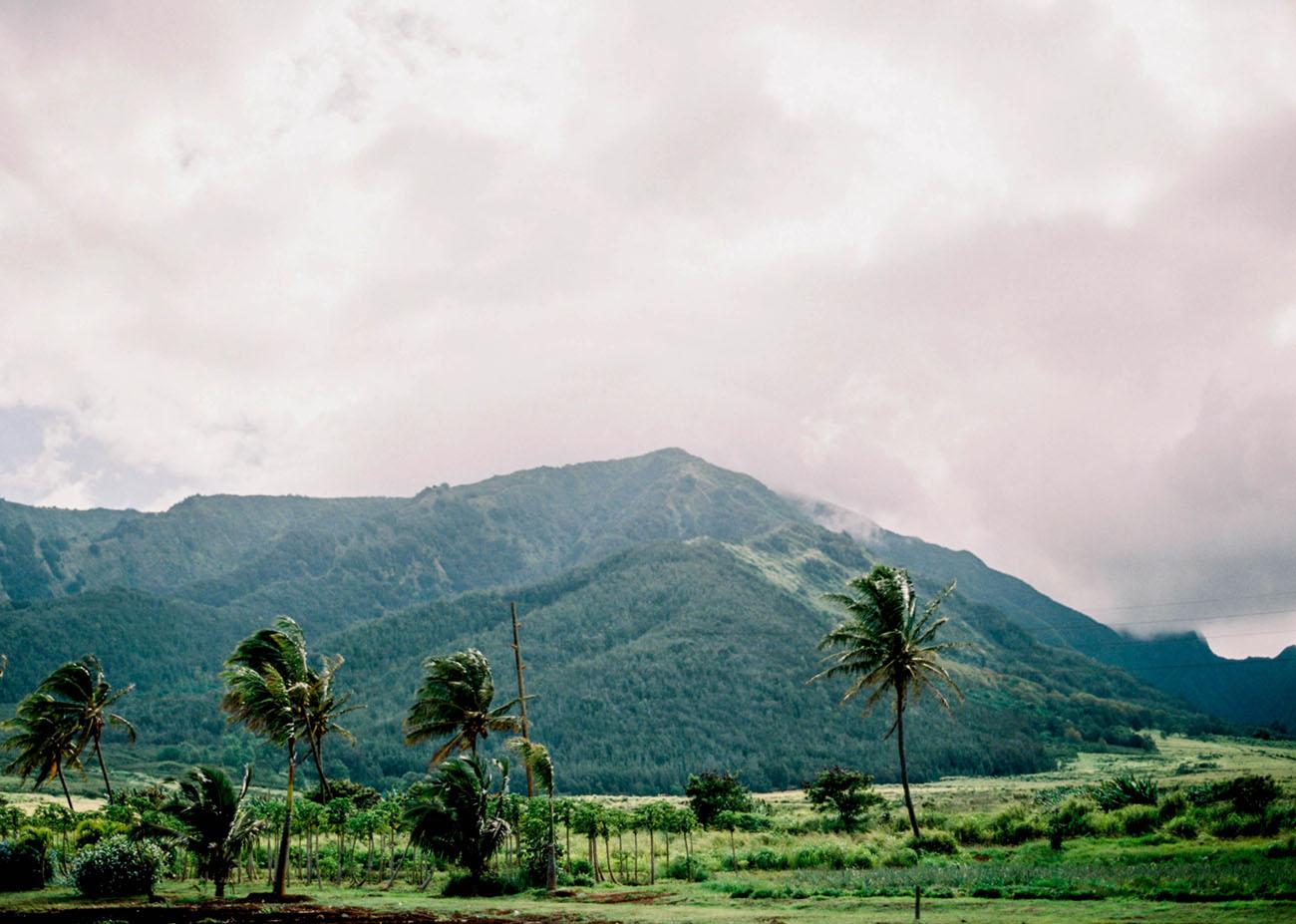 Maui Tropical Inspiration