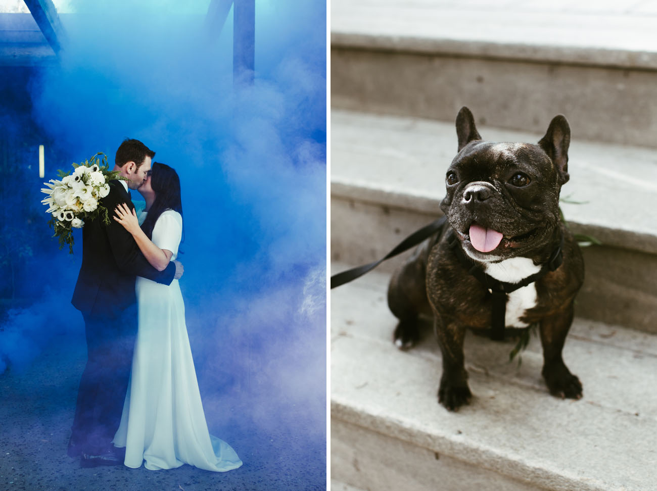 frenchie wedding pup