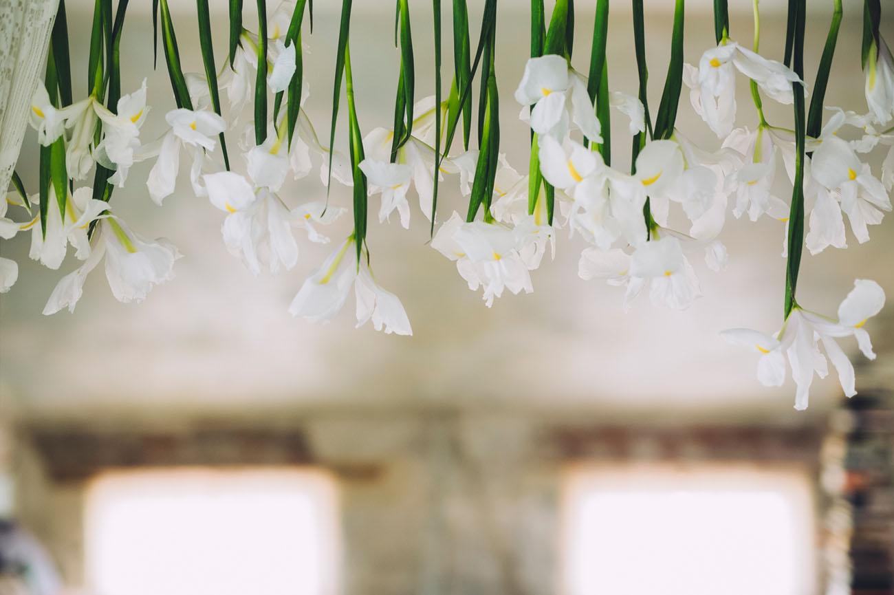 February Iris Flower Feature