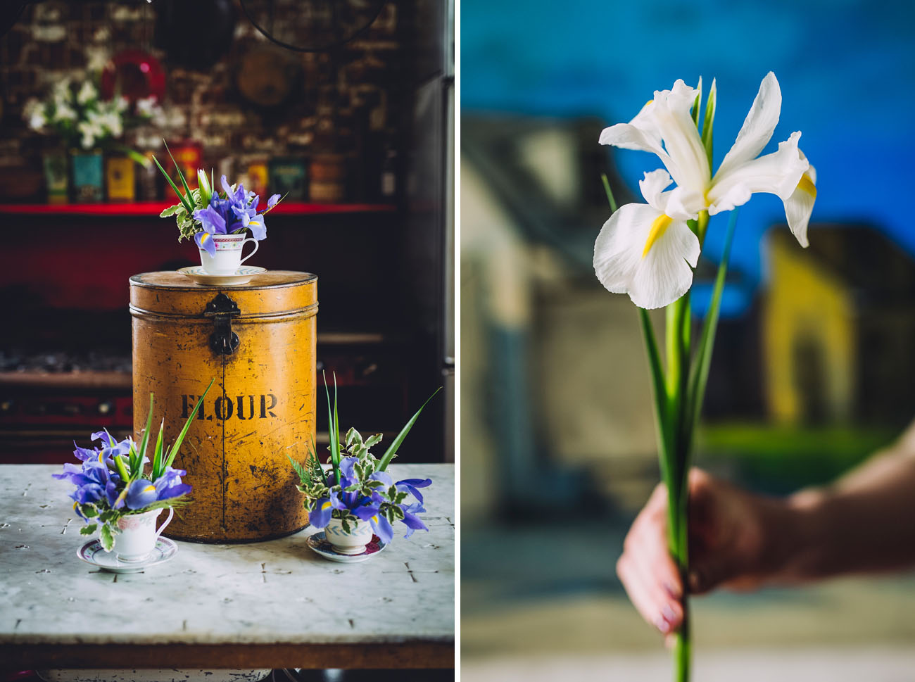 February Iris Flower Feature