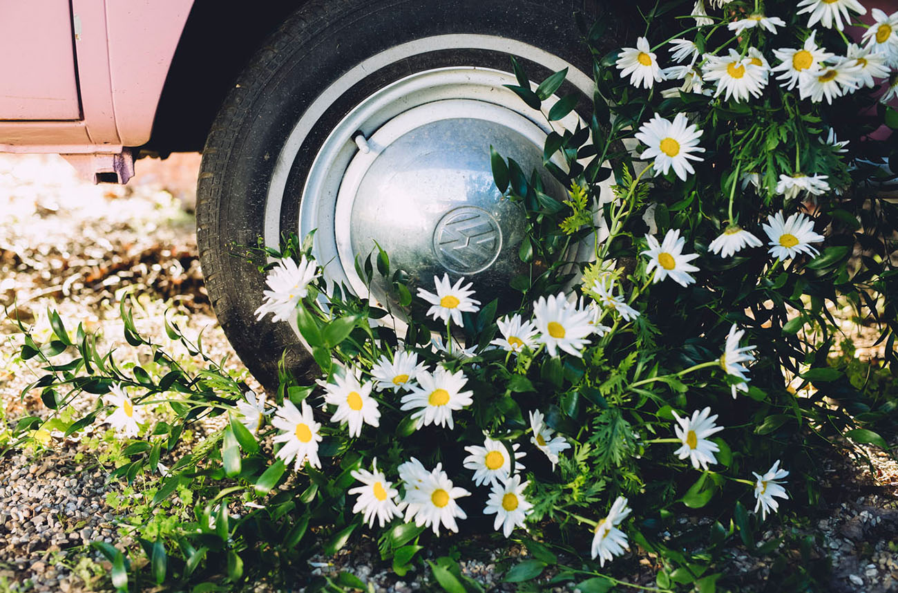 A year of flowers daisy green wedding shoes daisies bring to mind memories of picking flowers as children braiding flower crowns and setting fresh bouquets on the kitchen table the best moments izmirmasajfo