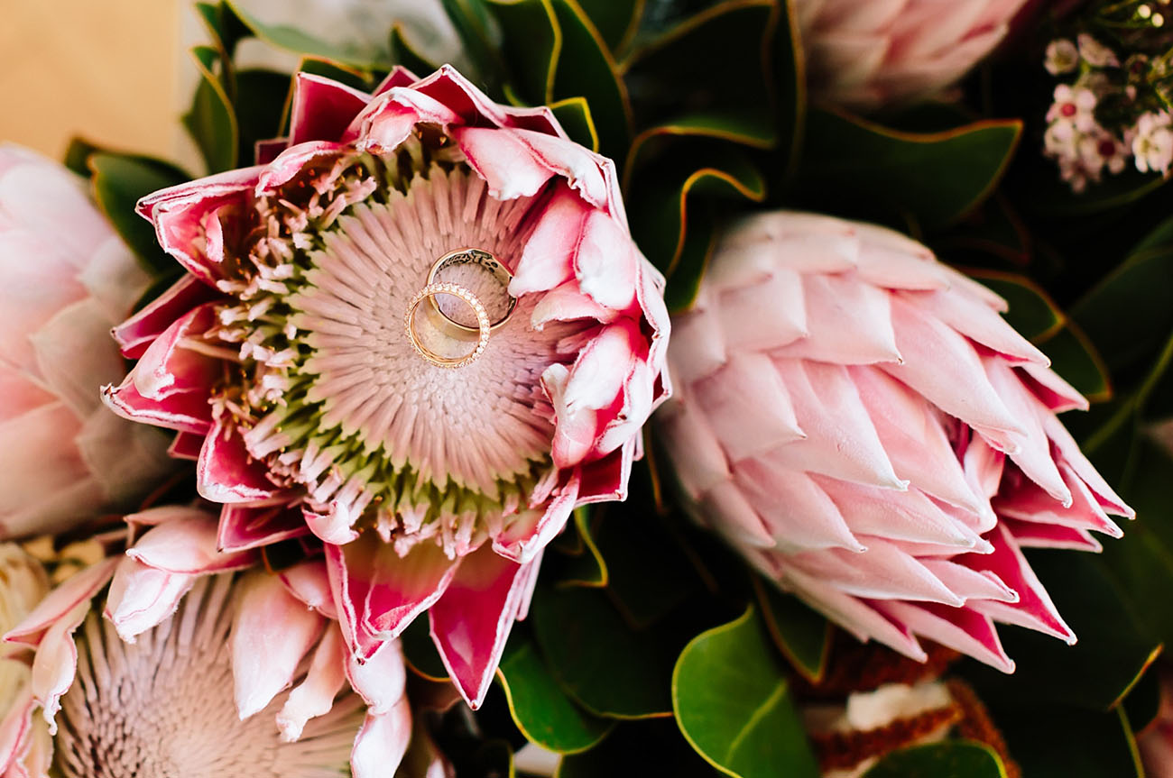protea with rings