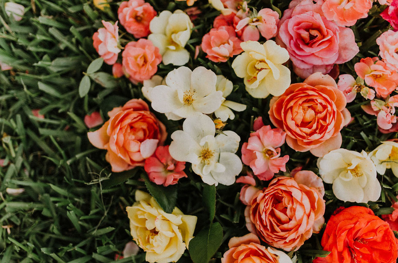 Flower of the Month - Rose