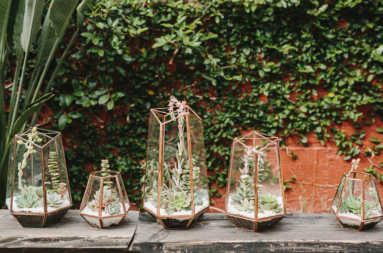geometric succulents