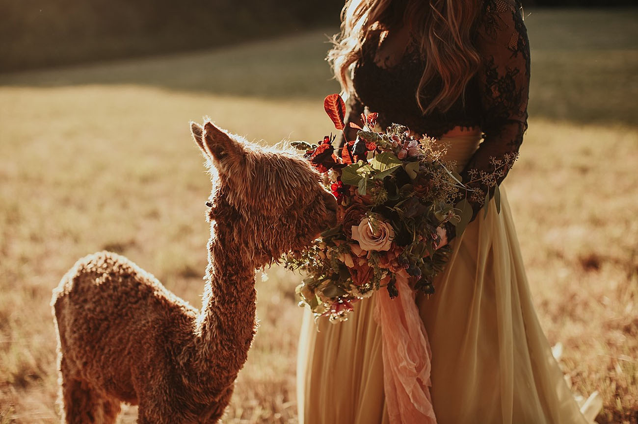 A Bride and Her Alpaca