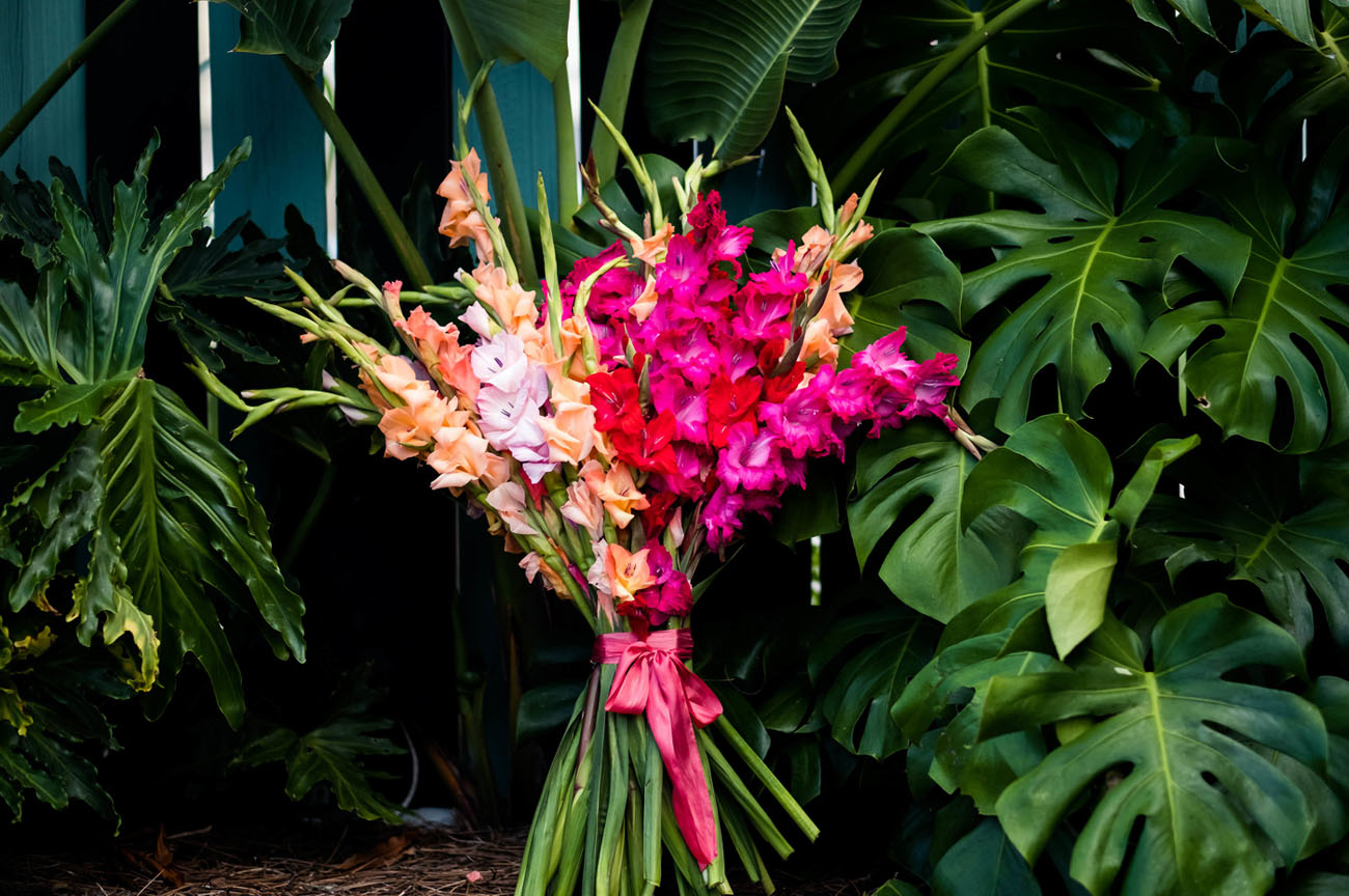 Gladiolus Flower of the Month