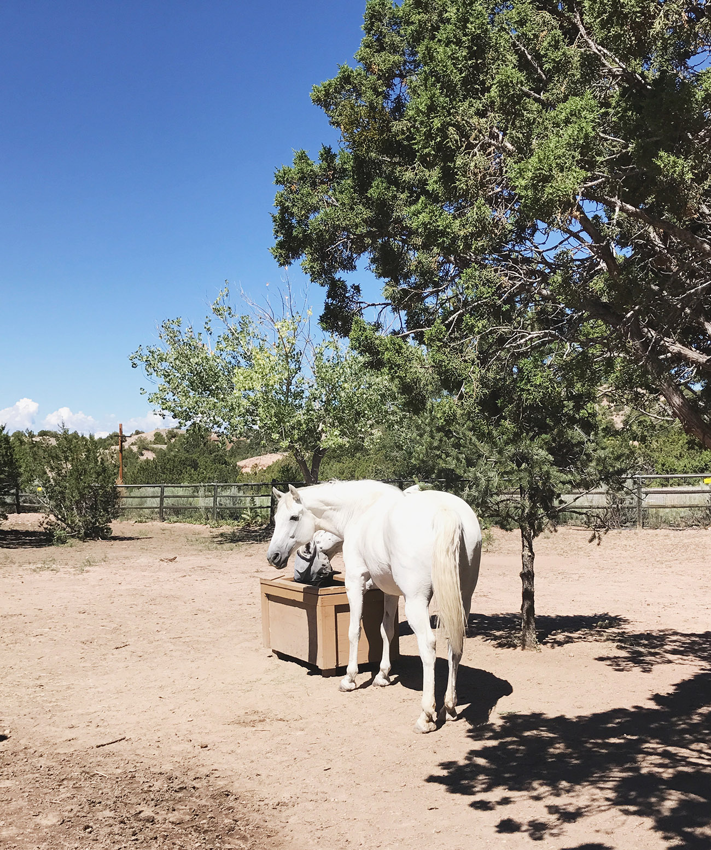 Santa Fe Horses