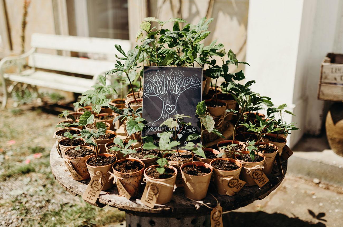 potted plants favors