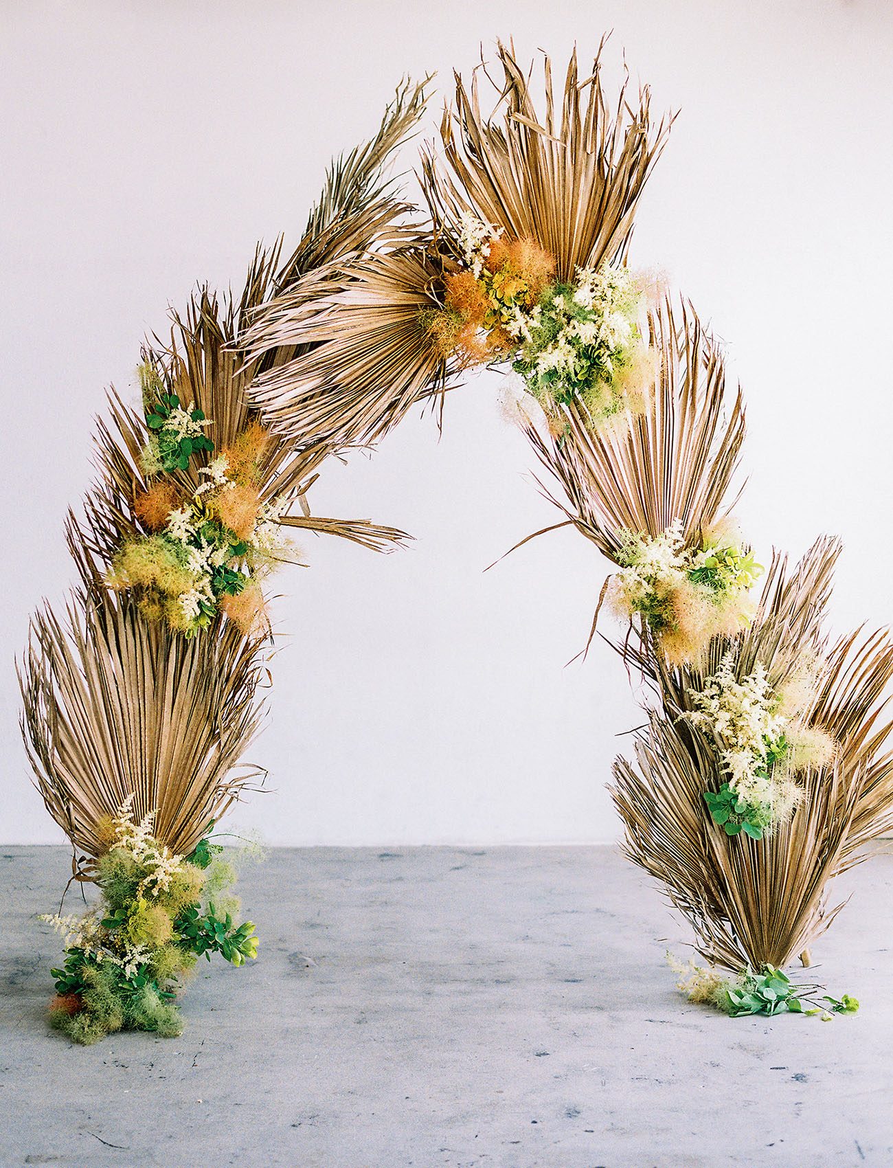 palm frond backdrop